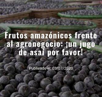 Frutos amazónicos frente al agronegocio: ¡un jugo de asaí porfavor!