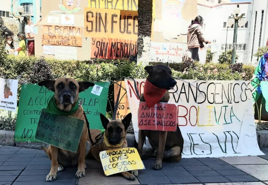 Refundación de Plazas en Bolivia, en defensa de la Madre Tierra, los animales y losbosques