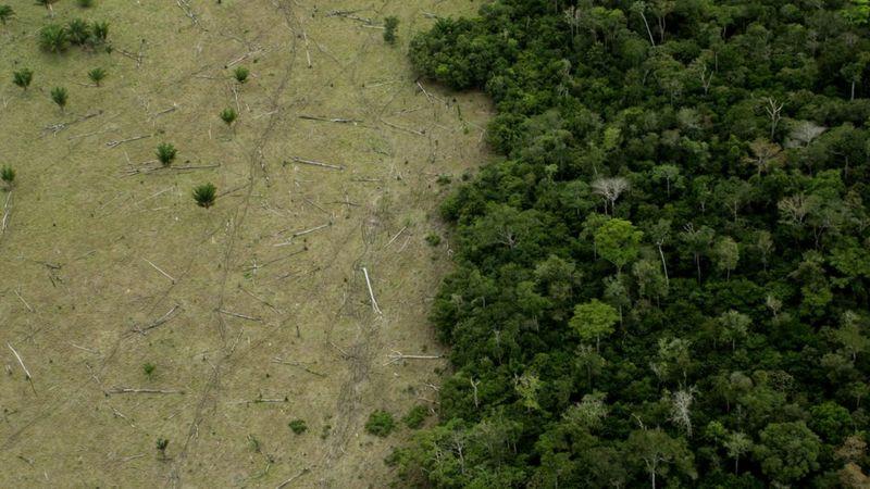 Deforestación de la Amazonía: cómo se venden ilegalmente terrenos de la selva en Brasil a través deFacebook