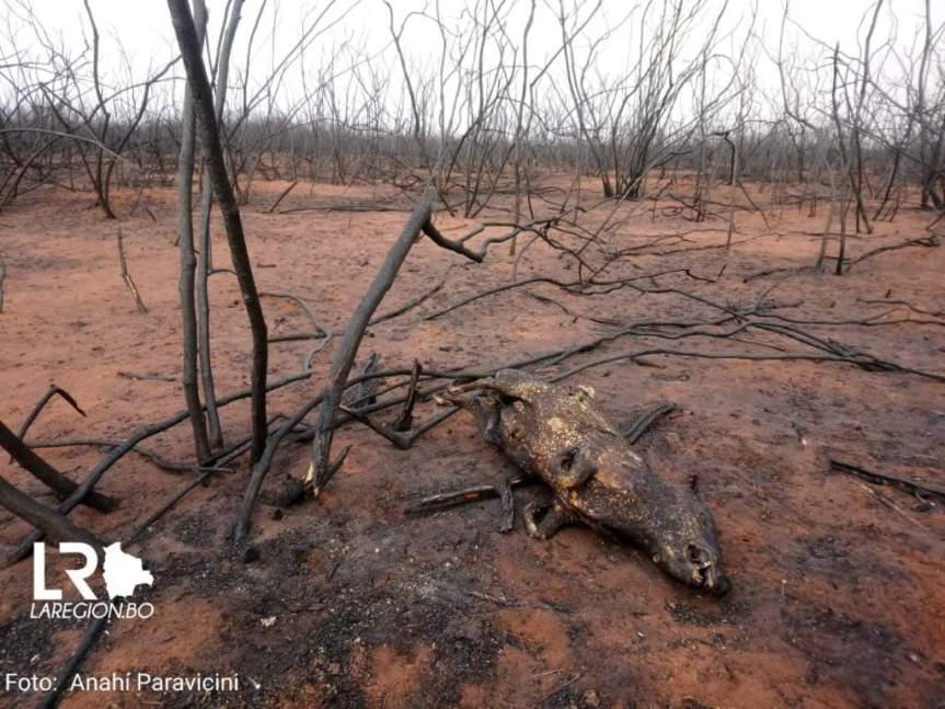 Bolivia: ¿están preparadas las áreas protegidas para enfrentar una tercera temporada deincendios?