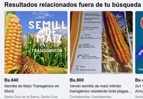 El negocio ilegal de semillas de maíz transgénico comercializadas vía Facebook enBolivia