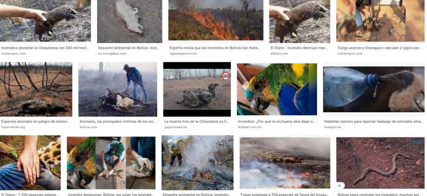 Ecocidio: Casi seis millones de animales fueron calcinados en incendios de 2019 en laChiquitanía